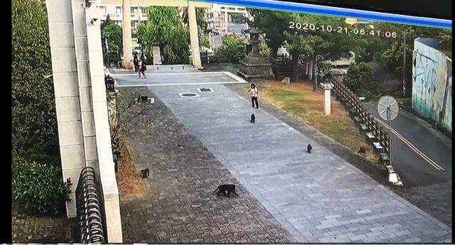 獼猴靠近學生,試圖想搶走早餐。(淵明國中提供)
