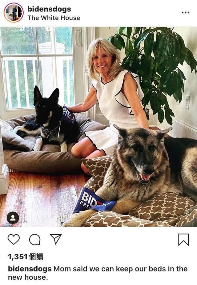 收容犬出頭天!拜登愛犬梅傑成「第一狗狗」   愛犬與拜登夫人吉爾合影。(翻攝自bidensdogs IG)