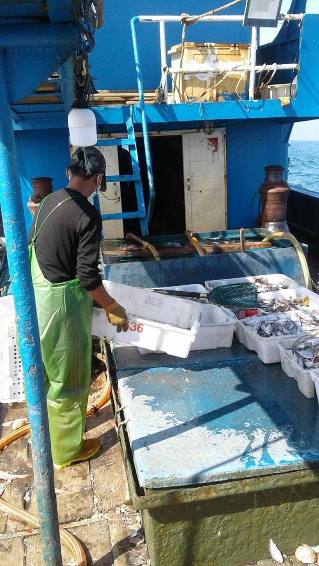 中國籍漁船越界非法捕撈上噸漁獲。(海巡署提供)