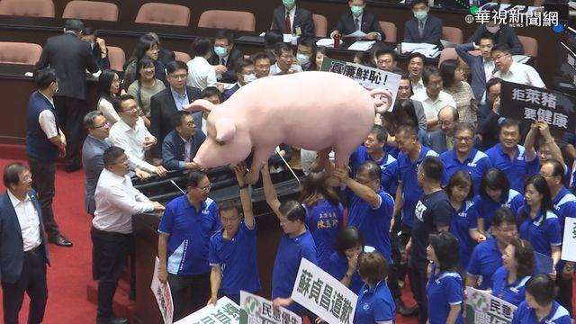 國民黨杯葛議會多次,道具豬也意外成亮點。(資料照片)