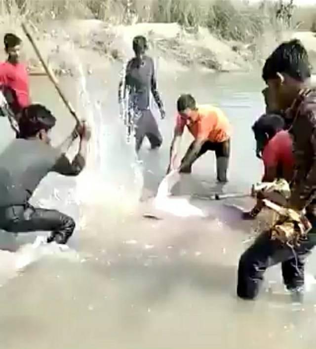 印度村民虐殺海豚/翻攝自Twitter影片截圖