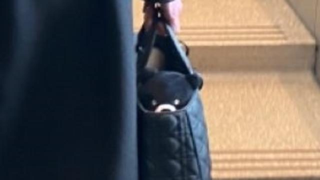 台灣黑熊玩偶在包包裡。