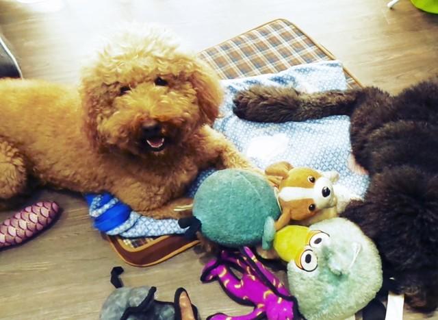 毛孩衣物、睡墊、布類玩具等,亦須使用中性溫和布類洗潔劑定期清洗。