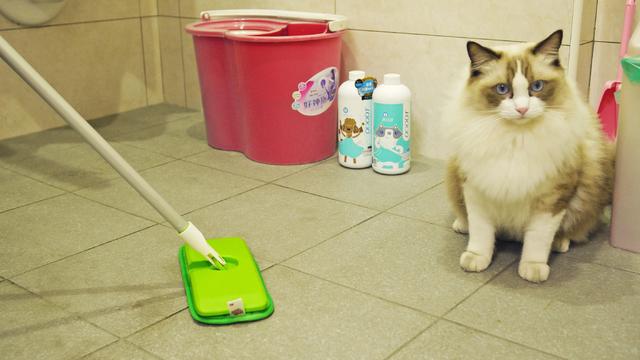 先用吸塵器或除塵拖清除灰塵毛髮,再選用專門分解寵物異味的清潔劑。