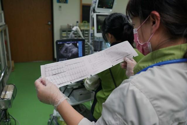 獸醫師初步研判「莎夏」的心臟功能較差,健康情形需要加強照顧、並進行後續追蹤。(動物園提供)