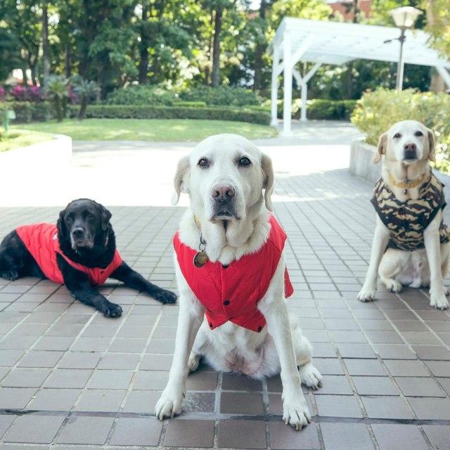 蔡英文2016年收養Bella、Bunny和Maru等退役導盲犬。(翻攝蔡英文臉書)