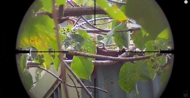網紅J爸與友人獵捕綠鬣蜥 (翻攝自YT/ J爸)